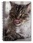 Cat Of Nicole 2 Spiral Notebook