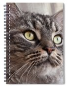 Cat Of Nicole 4 Spiral Notebook
