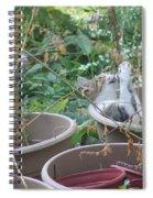 Cat Playing In Flowerpot Spiral Notebook