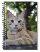 Cat Volterra Italy Spiral Notebook