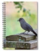Catbird Calling Spiral Notebook