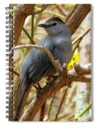 Catbird In Spring Spiral Notebook