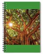 Catch A Sunbeam Under The Banyan Tree Spiral Notebook