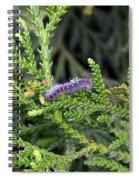 Caterpillar On Branch Spiral Notebook