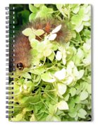 Caterpillar Spiral Notebook
