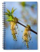 Catkin Time 2 Spiral Notebook