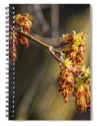 Catkin Time 4 Spiral Notebook