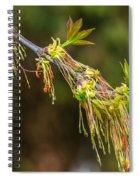 Catkin Time 5 Spiral Notebook