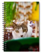 Cat's Eye On Me Spiral Notebook