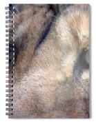 Cats Eyes Spiral Notebook