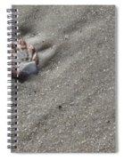 Cat's Paw Spiral Notebook