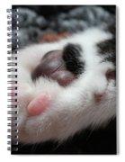 Cats Paw Spiral Notebook
