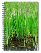 Cattail Green Spiral Notebook