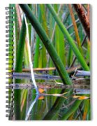 Cattail Reflections Spiral Notebook