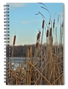 Cattails At Skymount Pond Pa Spiral Notebook