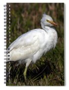 Cattle Egret  Spiral Notebook