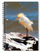 Cattle Egret In Breeding Plumage Spiral Notebook