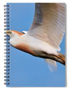 Cattle Egret On The Wing Spiral Notebook