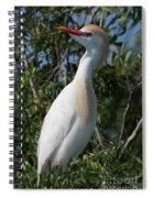 Cattle Egret Pose Spiral Notebook