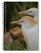 Cattle Egrets Dry Brushed Spiral Notebook