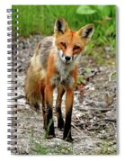 Cautious But Curious Red Fox Portrait Spiral Notebook