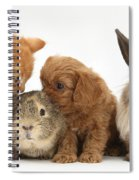 Cavapoo Pup, Rabbit, Guinea Pig Spiral Notebook