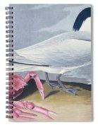 Cayenne Tern Spiral Notebook