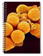 Cedar Pollen Sem Spiral Notebook