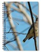 Cedar Wax Wing Spiral Notebook