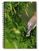 Cedar Waxwing #1 Spiral Notebook