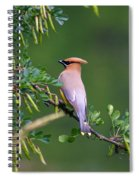 Cedar Waxwing 1 Spiral Notebook