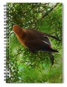 Cedar Waxwing Beauties 1 Spiral Notebook
