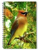 Cedar Waxwing Beauties 11 Spiral Notebook