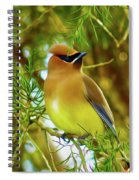 Cedar Waxwing Beauties 17 Spiral Notebook