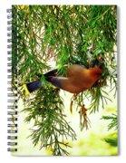Cedar Waxwing Beauties 19 Spiral Notebook