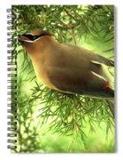 Cedar Waxwing Beauties 2 Spiral Notebook