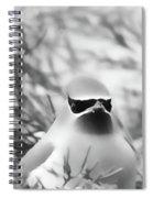 Cedar Waxwing Beauties 5 Spiral Notebook