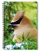 Cedar Waxwing Beauties 6 Spiral Notebook