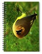 Cedar Waxwing Beauties 9 Spiral Notebook