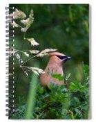 Cedar Waxwing Facing Right Spiral Notebook