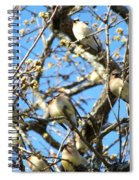 Cedar Waxwing Family Spiral Notebook