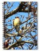 Cedar Waxwing I Spiral Notebook