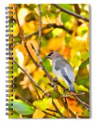 Cedar Waxwing In Autumn Leaves Spiral Notebook