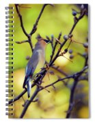 Cedar Waxwing With Windblown Crest Spiral Notebook