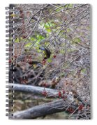 Cedar Waxwings Feeding Spiral Notebook