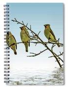 Cedar Waxwings On A Branch Spiral Notebook