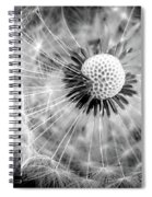 Celebration Of Nature In Black And White Spiral Notebook