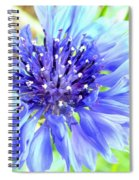 Centaurea Cyanus 1 Spiral Notebook