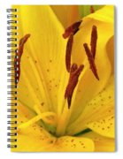 Center Of A Lily Spiral Notebook
