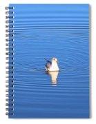 Center Of Attention  3247 Spiral Notebook
